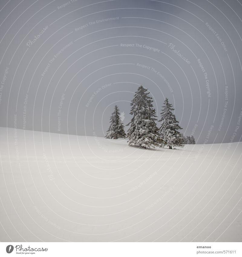 wo die Weihnachtsbäume wachsen Himmel Natur Ferien & Urlaub & Reisen blau Pflanze weiß Baum Landschaft Wolken Winter kalt Berge u. Gebirge Schnee Eis Wetter