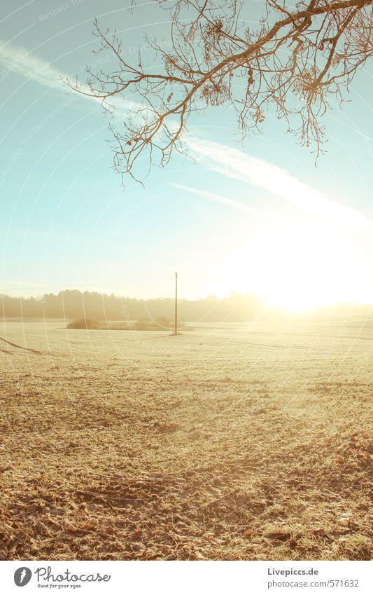 da Feld Umwelt Natur Landschaft Pflanze Himmel Wolken Sonne Sonnenlicht Herbst Schönes Wetter Baum Gras Blatt Nutzpflanze Wald Hügel leuchten blau braun grün