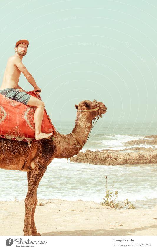 2 Kamele Mensch Himmel Natur Ferien & Urlaub & Reisen Mann Wasser Sommer Sonne Meer Landschaft Tier Strand Ferne Erwachsene Umwelt Küste