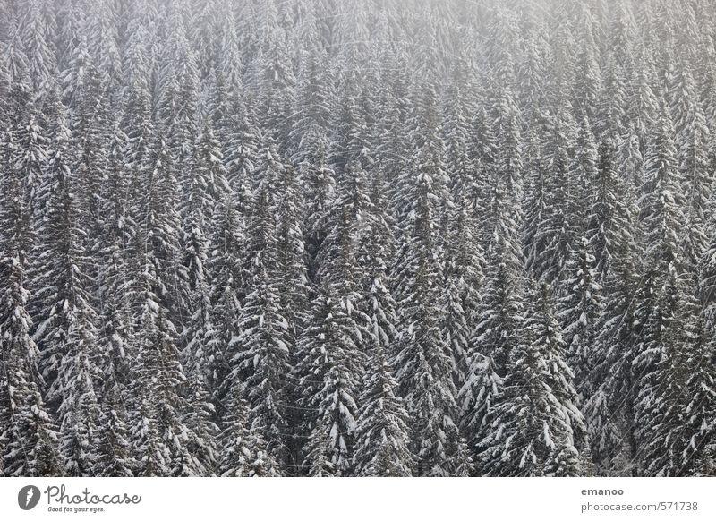 xmas trees Winter Schnee Winterurlaub Natur Landschaft Pflanze Klima Wetter Nebel Baum Wald Berge u. Gebirge dunkel kalt weiß Schwarzwald Fichte Nadelwald
