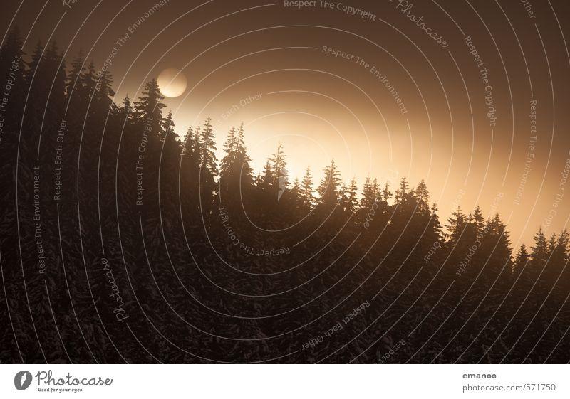 Wintersonne Berge u. Gebirge Natur Landschaft Himmel Wolken Sonne Klima Wetter Wind Nebel Eis Frost Schnee Pflanze Baum Wald dunkel gold schwarz Schwarzwald