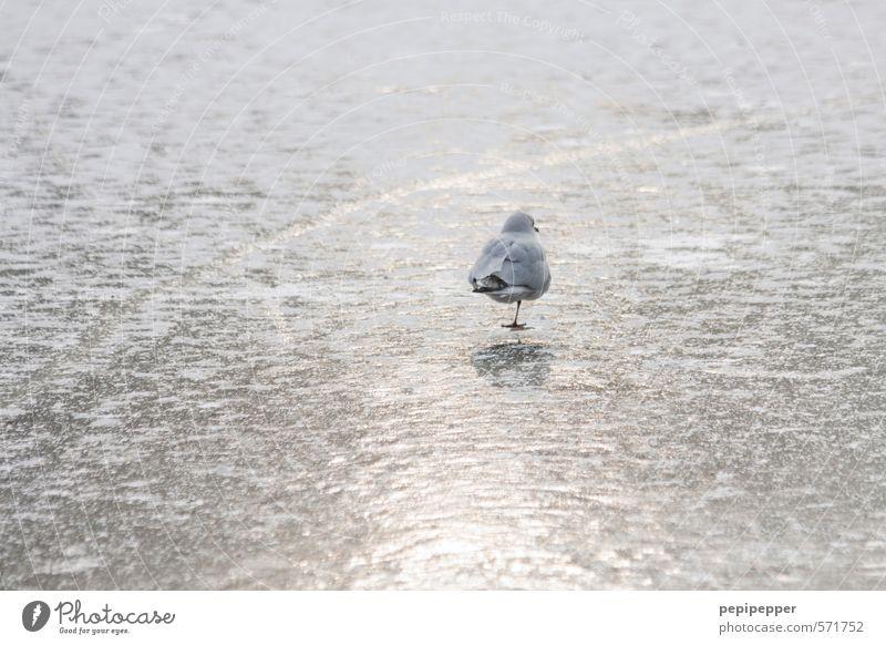 einbein Eisenbahn Winter Schönes Wetter Frost Schnee Küste Seeufer Flussufer Teich Park Tier Vogel Fell Pfote Fährte 1 Wasser frieren stehen Coolness glänzend