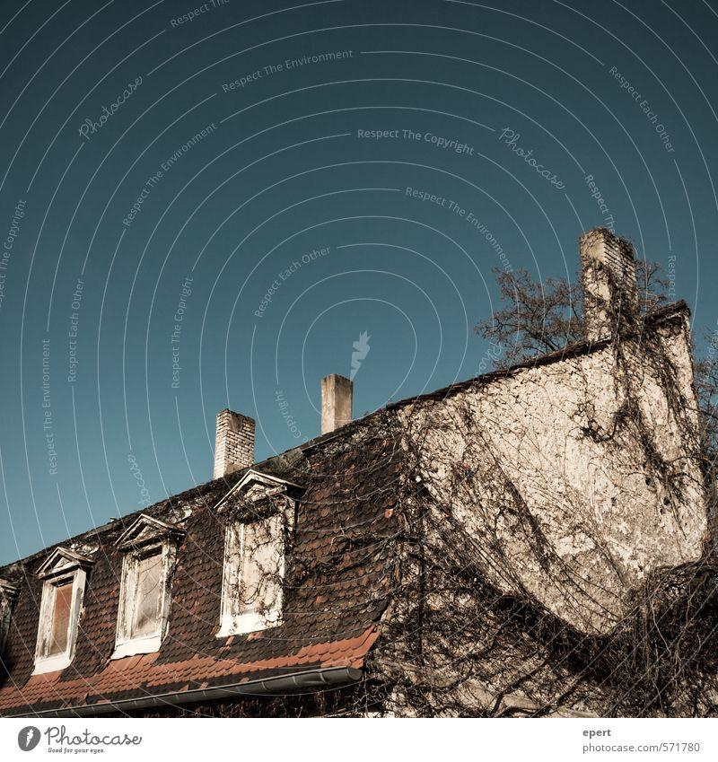 Raumaneignung Pflanze Baum Haus Mauer Wand Fassade Fenster Dach Schornstein Stein Holz bewachsen verwildert alt bedrohlich dreckig dunkel gruselig trist Stadt