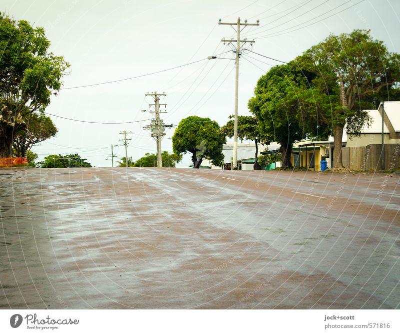 Douglas Street Baum ruhig Ferne Straße Wege & Pfade hell Stimmung Regen Idylle authentisch frei nass Sauberkeit Dach Gelassenheit Wolkenloser Himmel