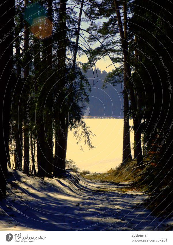Auf in die Sonne Wald Tanne Baum dunkel gefroren See Aussicht Winter Ferne Eindruck Licht hell Kontrast Schnee Eis Landschaft Natur Schatten Wasser