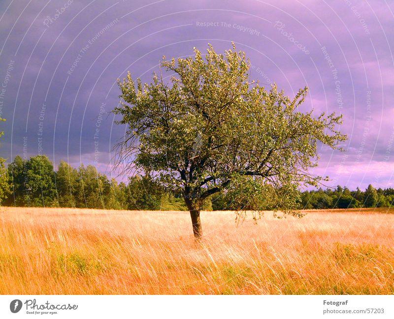 Der Baum. Heide Wiese Wald grün Blatt Pflanze Himmel Holzmehl Natur Gewitter Getreide grain heaven sky thunderstorm Orkan woods