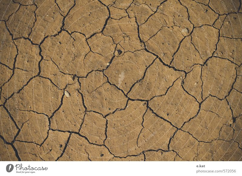 Trocken Natur Erde Sommer Klimawandel Dürre Strand Erschöpfung Farbfoto Außenaufnahme Menschenleer Textfreiraum links Textfreiraum rechts Textfreiraum oben