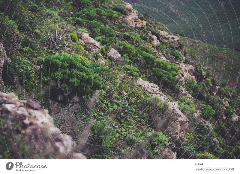Berge Umwelt Natur Landschaft Pflanze Tier Felsen Berge u. Gebirge grün Farbfoto Außenaufnahme Menschenleer Starke Tiefenschärfe