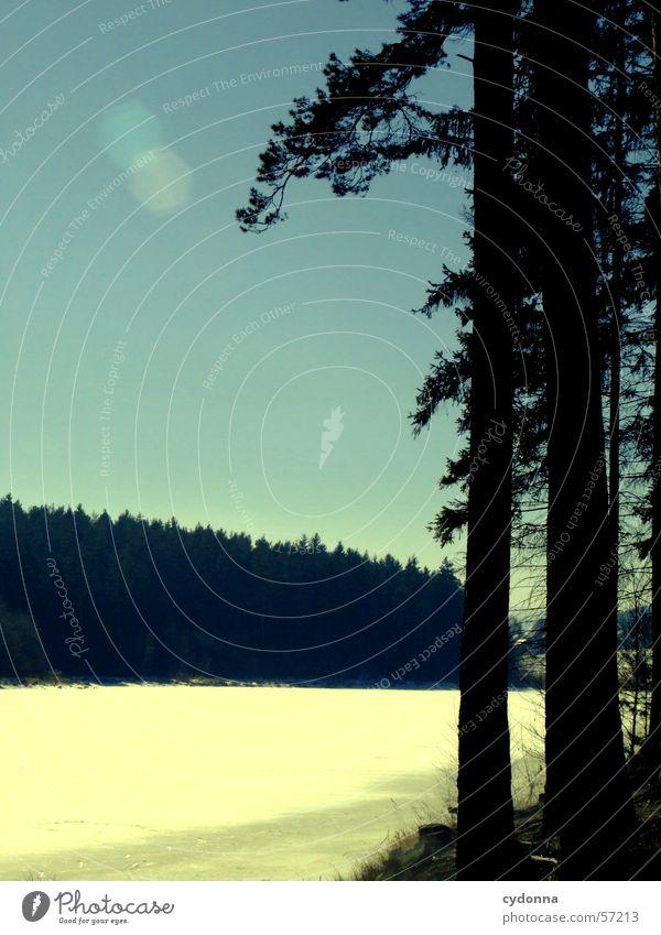 Am See Natur Baum Sonne blau Winter Wald kalt Schnee Landschaft Eis Ausflug Tanne gefroren Baumstamm Eindruck