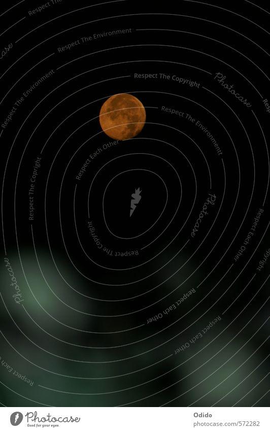 Mondaufgang Natur Landschaft Himmel Wolkenloser Himmel Nachthimmel Vollmond Romantik Aufgang Korfu Mondschein Farbfoto Außenaufnahme Menschenleer