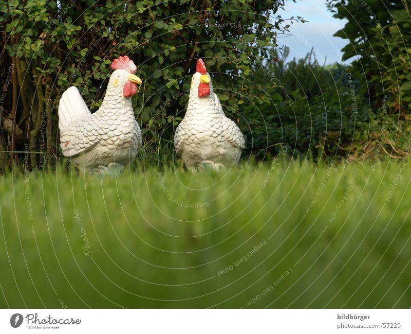 zwei über vogelgrippe diskutierende freilandhühner Haushuhn luftig Stillleben Lifestyle Gartenzwerge eng Zufriedenheit Vogel Federvieh Keramik 2 Geflügelfarm