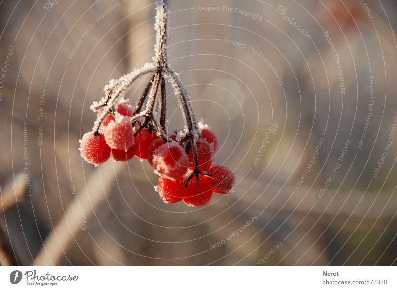 erster Frost Natur Pflanze Winter kalt Eis Frost entdecken
