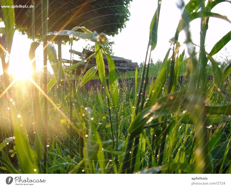morgentau Sonnenaufgang Tau Gras Wiese