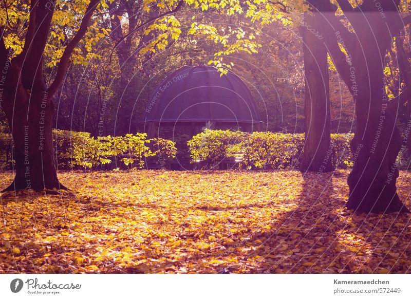 Herbstlicht Natur Sonne Baum ruhig Blatt Umwelt Stimmung Park Idylle ästhetisch
