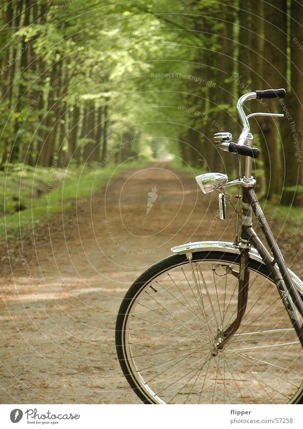 Fahrradausflug Natur grün Baum Ferien & Urlaub & Reisen Einsamkeit ruhig Wald Erholung Wege & Pfade Frühling Ausflug frisch Spaziergang Schönes Wetter abgelegen