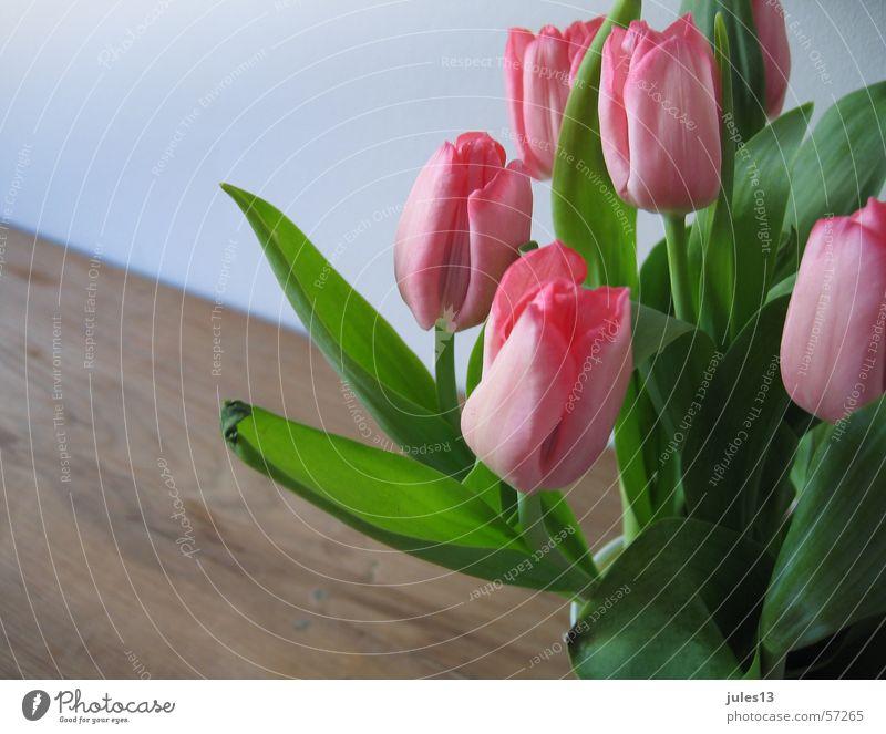 tulpen_2 rosa rot grün Tulpe Blume Tisch braun Wand Frühling frisch Anschnitt Raum Innenaufnahme