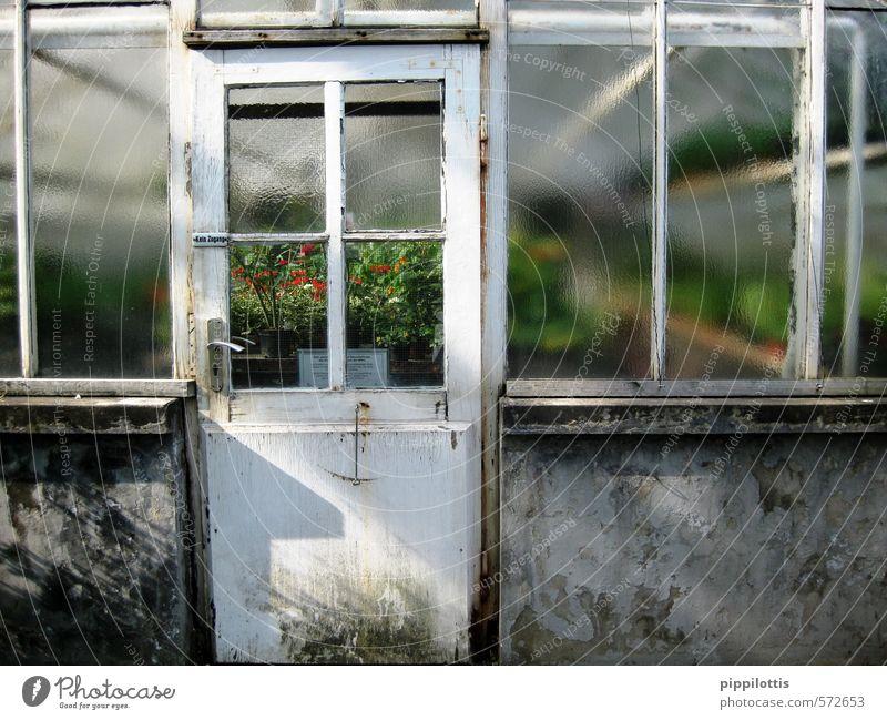 Blick ins Grüne Natur Pflanze Landschaft Ferne Fenster Umwelt Wand Mauer Garten träumen Tür Klima Wachstum Perspektive beobachten Blühend