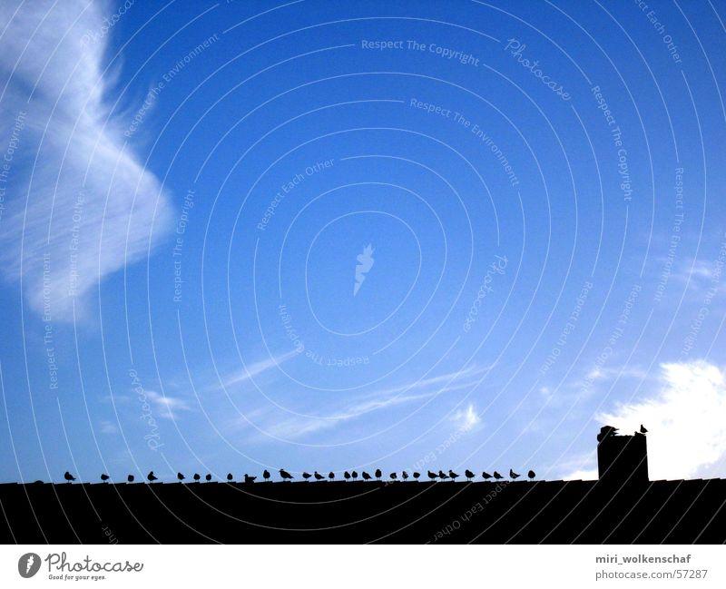 Dächer über Berlin Himmel Wolken Vogel Dach Morgen