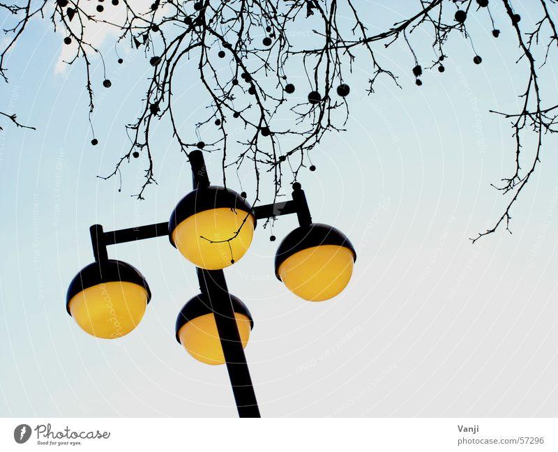 Laterne II Himmel Baum blau gelb Wetter verrückt rund Ast Kugel