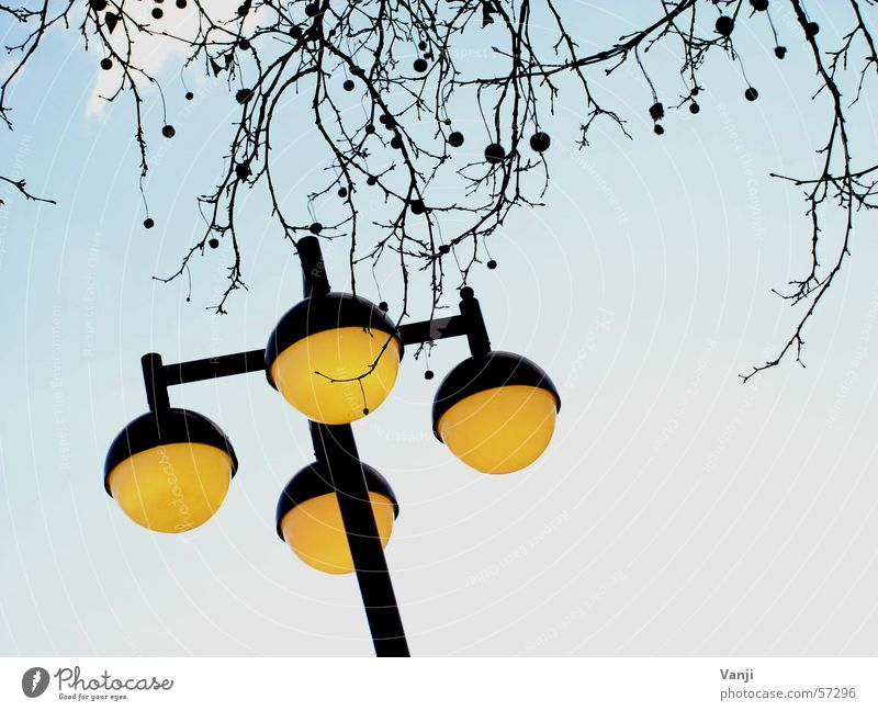Laterne II Himmel Baum blau gelb Wetter verrückt rund Ast Kugel Laterne