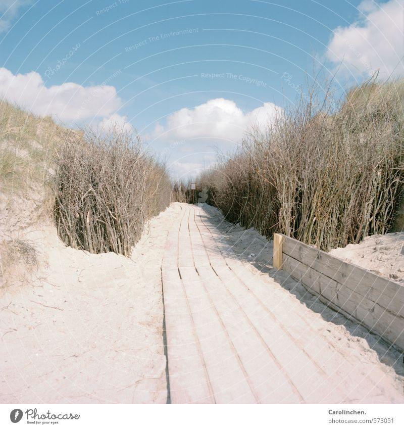 Holzweg harmonisch Zufriedenheit wandern Natur Landschaft Sand Wasser Wolken Frühling Sträucher Strand Nordsee Glück Vorfreude Wege & Pfade Helgoland Farbfoto