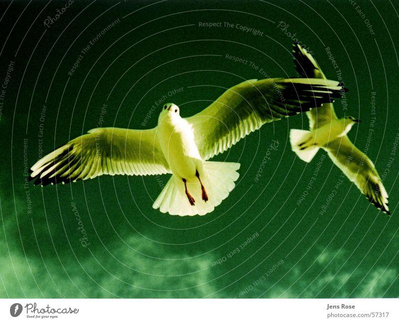 möwen Wasser Himmel Sonne Strand Wolken Farbe Herbst Sand Vogel fliegen Luftverkehr schreien Schönes Wetter Möwe füttern