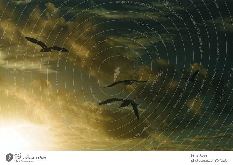 möwen Wasser Meer Strand Herbst Fuß Sand Wind fliegen Luftverkehr Spaziergang Ostsee Darß Prerow