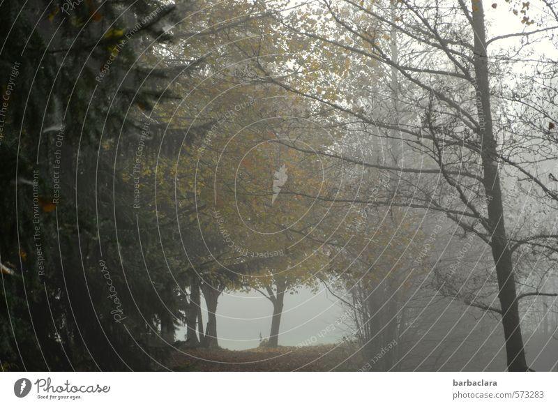 Waldgeschichten Natur Landschaft Herbst Nebel Baum Blatt dunkel Stimmung Einsamkeit geheimnisvoll ruhig Sinnesorgane Umwelt Vergänglichkeit Wandel & Veränderung