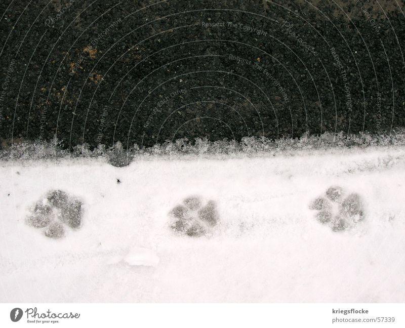 die dreisten 3 Schnee Straße Hund Pfote Fußspur schwarz weiß Asphalt Gassi gehen Außenaufnahme Textfreiraum oben Vogelperspektive Abdruck Symbole & Metaphern