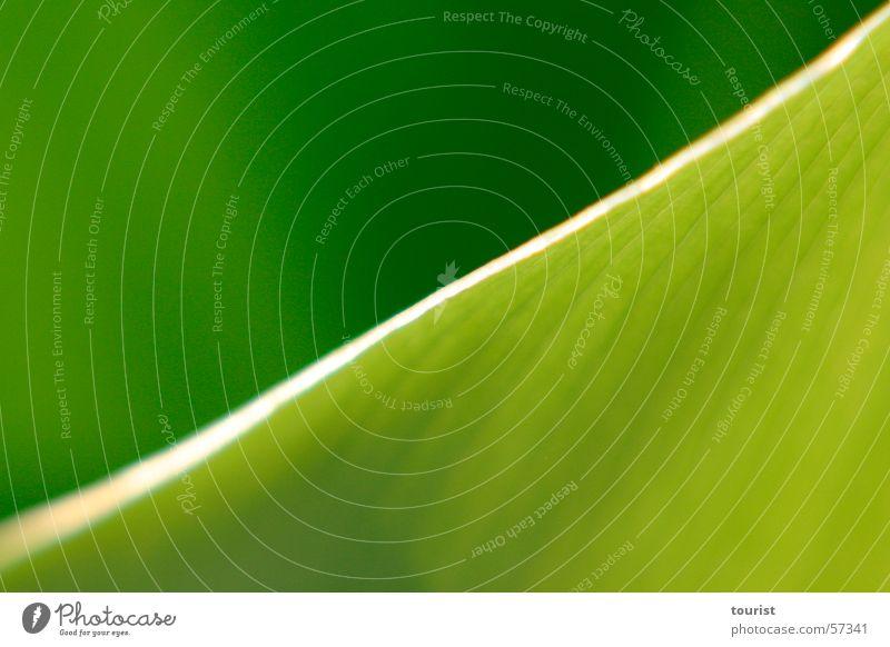Blattdiagonale Licht grün Unschärfe Schatten