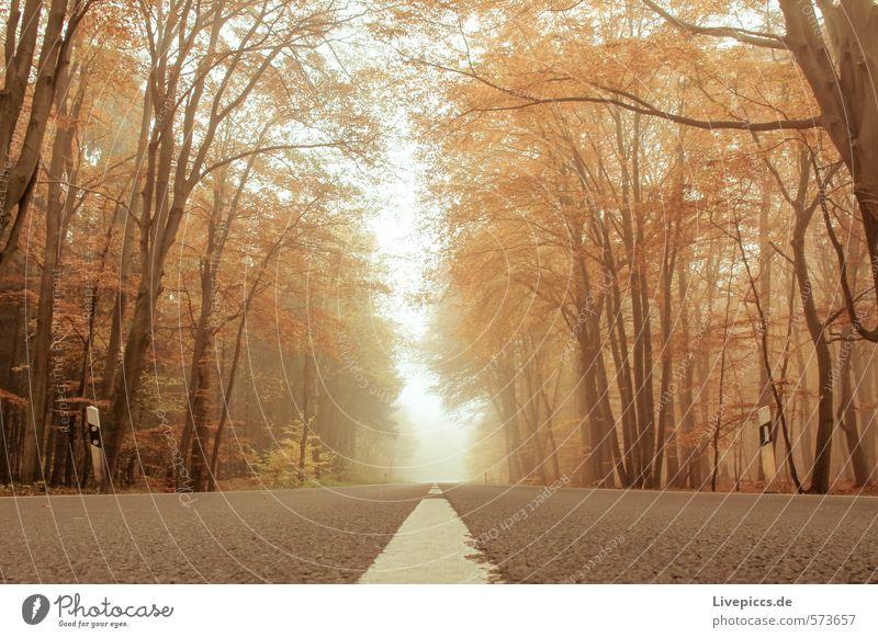 Straße durch den Herbst Umwelt Natur Landschaft Pflanze Wasser Himmel Nebel Baum Blatt Park Wald Verkehr Verkehrswege Wärme weich Gelassenheit ruhig Farbfoto