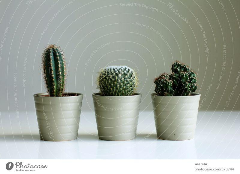 bestechendes Trio grün Pflanze braun Freizeit & Hobby Dekoration & Verzierung 3 Kaktus Tannennadel