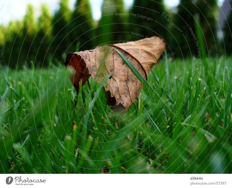 blatt Natur grün Blatt Wiese braun