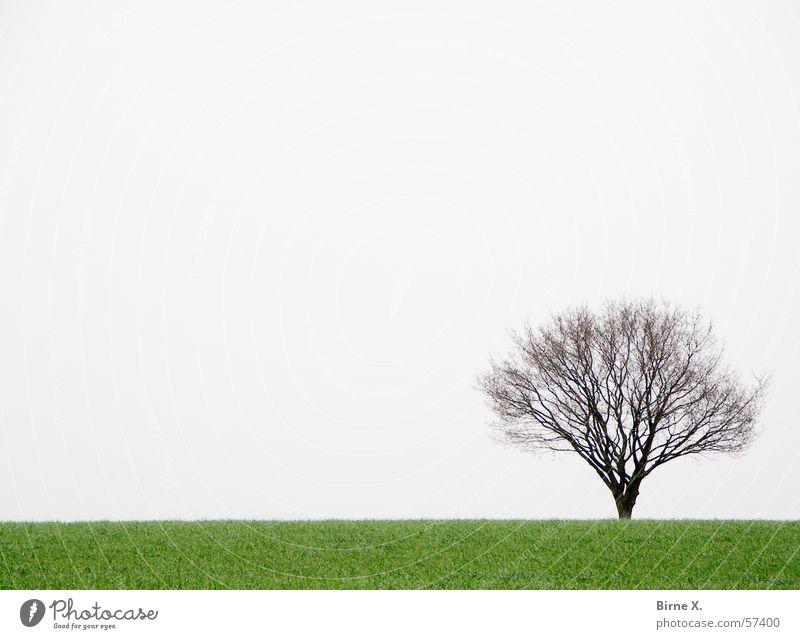Lonely little tree Baum Feld Winter Frühling Gras Wiese Einsamkeit trist schlechtes Wetter grau grün Ast Himmel