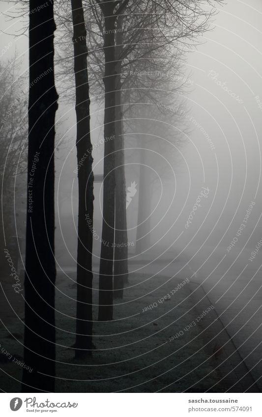 Zwielichtige Abzweigung Baum Einsamkeit dunkel schwarz kalt Straße Traurigkeit Herbst Wege & Pfade grau Deutschland Wetter Nebel Angst Europa bedrohlich