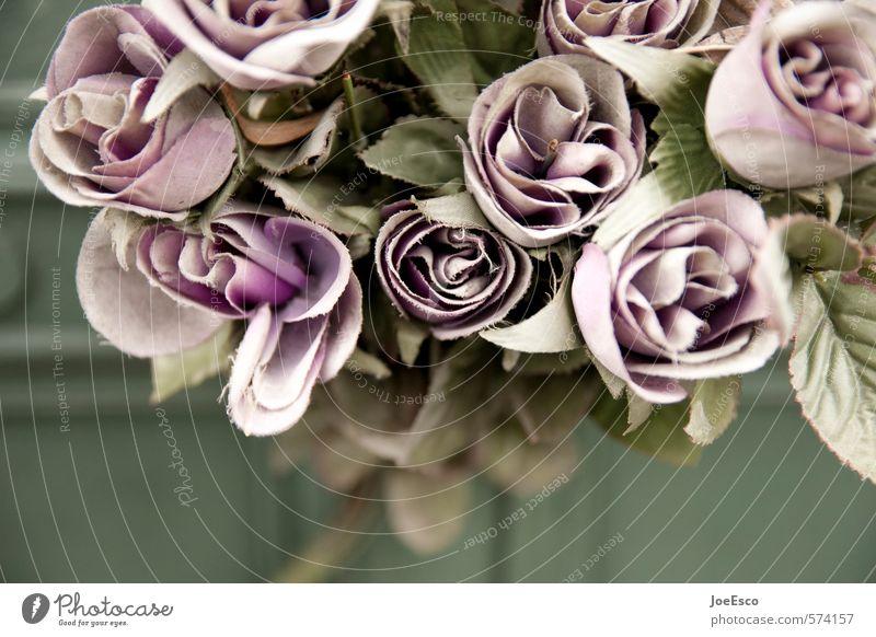 #574157 Blume Einsamkeit dunkel Traurigkeit Blüte Tod Feste & Feiern retro Trauer Vergangenheit violett Kunststoff Rose Kitsch Stoff Blumenstrauß