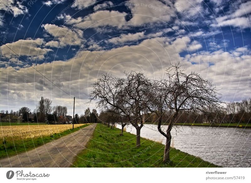 Sommertag Wolken mehrfarbig übertrieben Baum Wasser Farbe Natur Landschaft