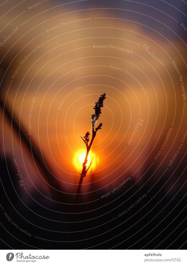 sonnen gras Sonne Gras