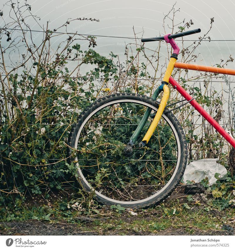 Portobello IX Natur Verkehrsmittel Fahrradfahren mehrfarbig ästhetisch Design einzigartig Kunst alt retro Retro-Farben Zaun Barriere Hecke Sträucher grün Wolken