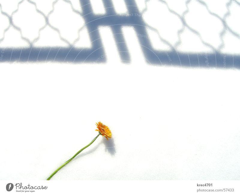 Blume im Schnee 1 weiß Blume grün Schnee hell orange Überbelichtung