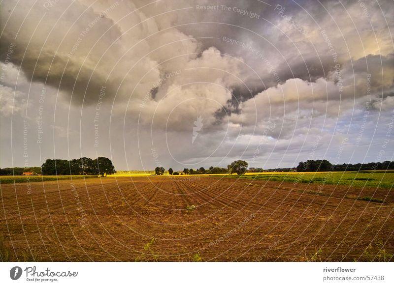 Feld an der Hase Wolken Wiese Baum himmlisch Götter mehrfarbig Landwirtschaft träumen schön Stimmung Landschaft Himmel Gott Farbe