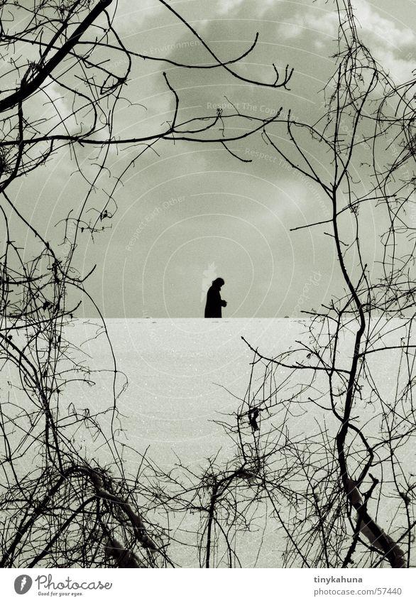 Die seltene Spezies des Bilderrahmenstrauches Winter Wolken Einsamkeit Schnee Sträucher Spaziergang Ast Rahmen Unterholz