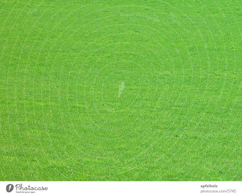 grün Wiese Frühling