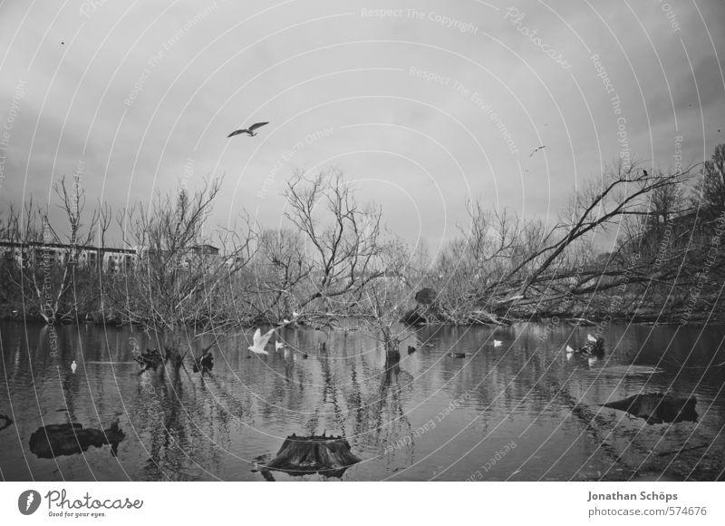 Lochend Park I Umwelt Natur Landschaft Himmel Pflanze Baum Seeufer Moor Sumpf Teich Tier Vogel Tiergruppe ästhetisch dunkel gruselig Tod bedrohlich Schottland