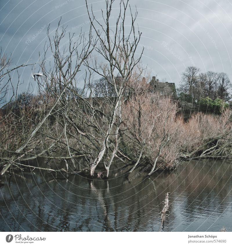 Lochend Park II Umwelt Natur Landschaft Himmel Pflanze Baum Seeufer Moor Sumpf Teich ästhetisch dunkel gruselig Tod bedrohlich Schottland Großbritannien Wasser