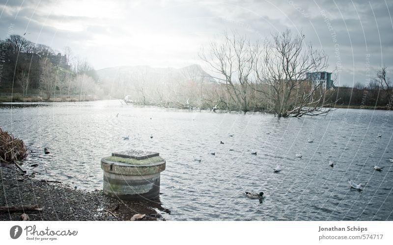 Lochend Park III Umwelt Natur Landschaft Himmel Pflanze Baum Seeufer Moor Sumpf Teich ästhetisch Schottland Großbritannien Wasser Teichufer