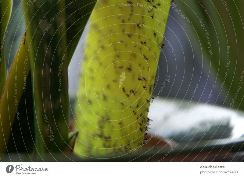 gelber tod pflanzen mücken gelb pflanzen tiere tag gelb mücken tod pflanzen freijand