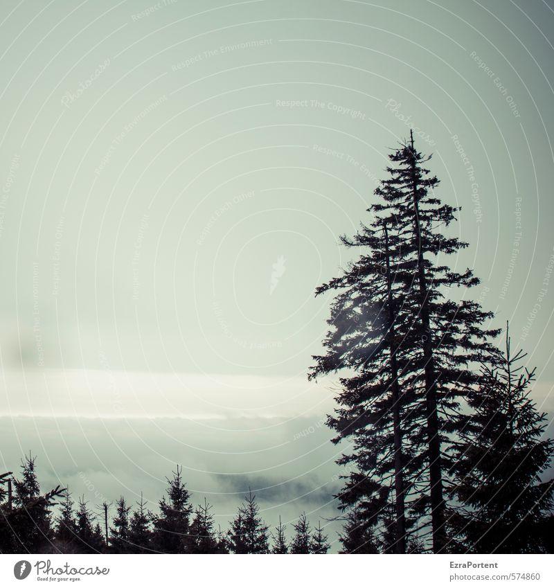 Oh Tannenbaum ... Umwelt Natur Landschaft Pflanze Luft Himmel Wolken Herbst Winter Klima Wetter schlechtes Wetter Nebel Baum Nutzpflanze Wald Berge u. Gebirge