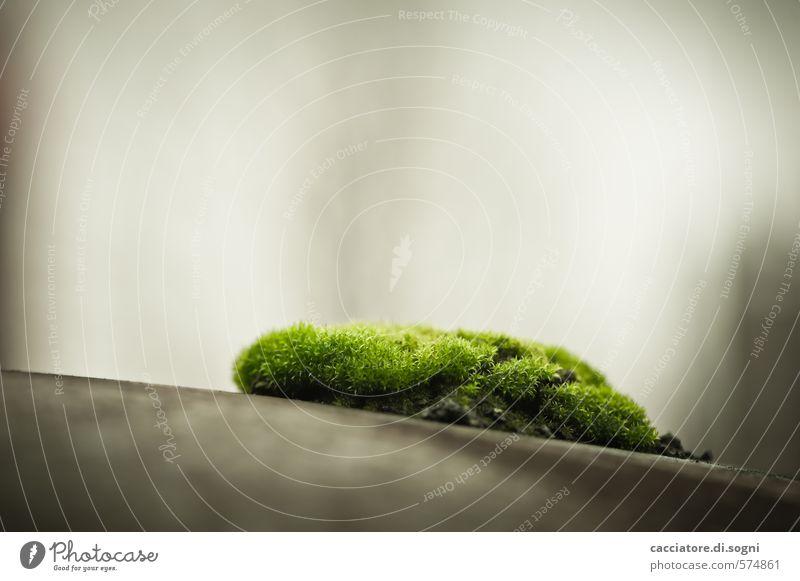 Ohne Moos wär gar nix los Umwelt Pflanze Herbst Schönes Wetter ästhetisch dunkel exotisch kuschlig klein nah braun grau grün Schutz Verschwiegenheit ruhig