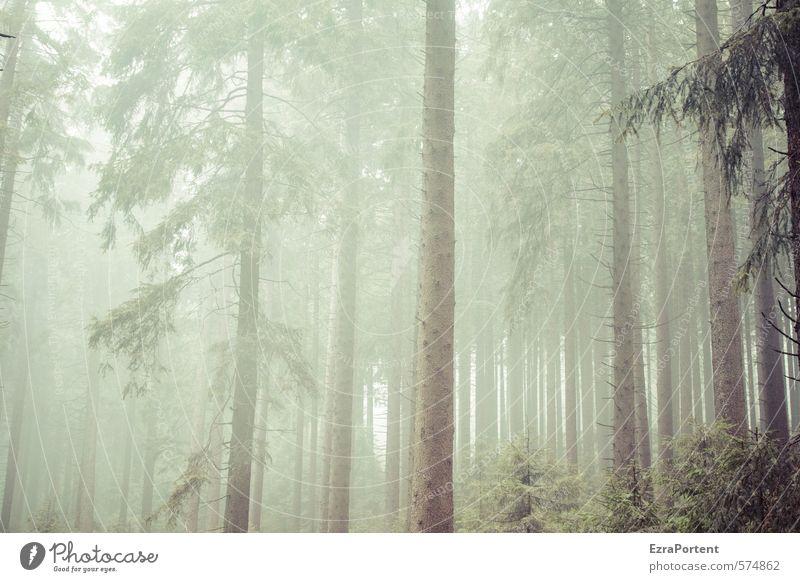 |||||!|| Umwelt Natur Landschaft Pflanze Herbst Klima Wetter schlechtes Wetter Nebel Baum Wald Holz Linie dunkel kalt braun grau grün Harz Reihe viele stehen